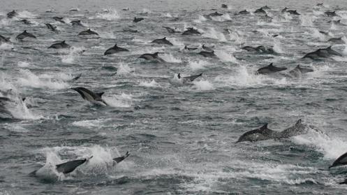 dolphinsinsd
