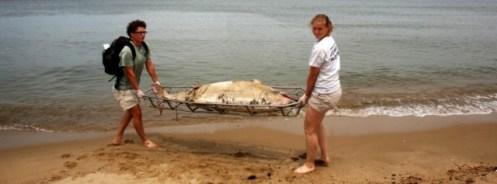 muerte-delfines-costa-este-mn2
