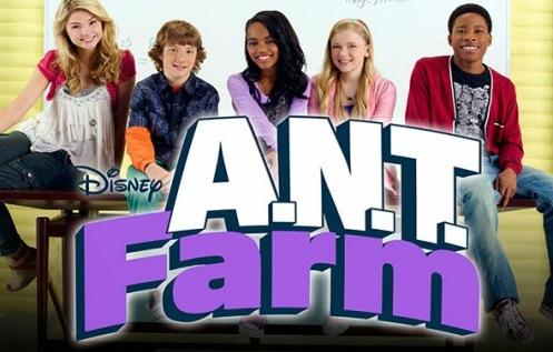 ant-farm-30