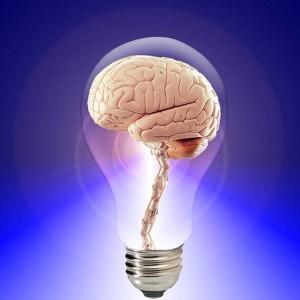 brain-public-domain-300x300