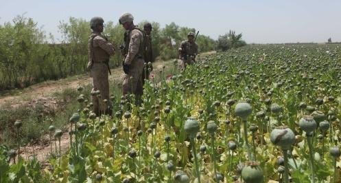 opium-fields10