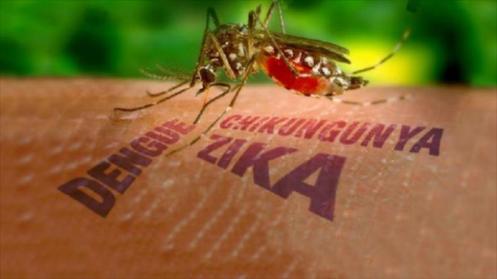 Virus-transmitidos-por-mosquitos